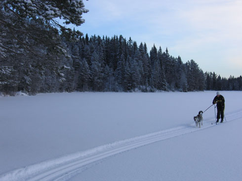 Skiing trip with dog